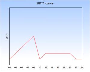 SIRT1 12h fast