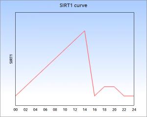 SIRT1 16h fast