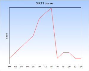 SIRT1 16h fast plus resveratrol