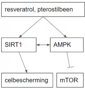 resveratrol sirt1 ampk mtor